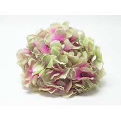 Vencovka hortenzia, mix farieb, 21 cm