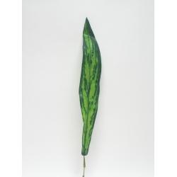 List, 62 cm