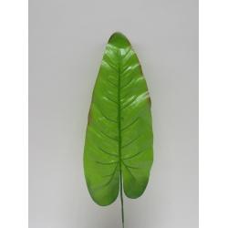 List, 50 cm