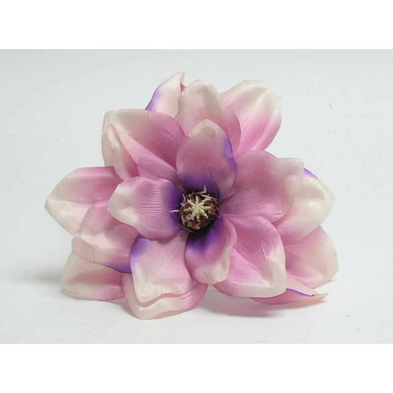 Vencovka magnolia, 17 cm
