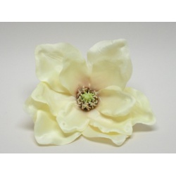 Vencovka magnolia, 19 cm