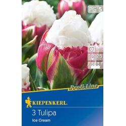 Tulipán Ice Crean, 25 cm, 3 ks