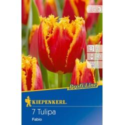 Tulipán Fabio, 45 cm, 7 ks