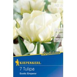 Tulipán Exotic Emperor, 40 cm, 7 ks