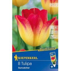 Tulipán Suncatcher, 45 cm, 8 ks