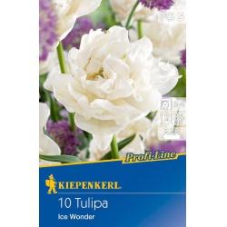 Tulipán Ice Wonder, 35 cm, 10ks