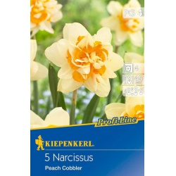 Narcis Peach Cobbler, 45 cm, 5 ks