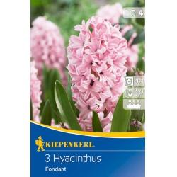 Hyacint Fondant, 20 cm, 3 ks