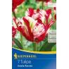 Tulipán Estella Rijnveld, 50 cm, 7 ks