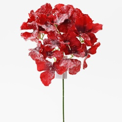 Hortenzia sólo, zasnežená, červená