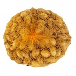 Cibuľa sadzačka, Senshyu Yellow, 500 g