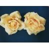 Vencovka ruža, 11 cm