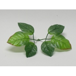List ruža - pod vencovku, 22 cm