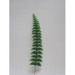 List papraď, 46 cm