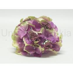 Vencovka hortzenzia, mix farieb, 16 cm