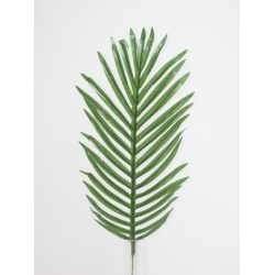 List palma, 50 cm