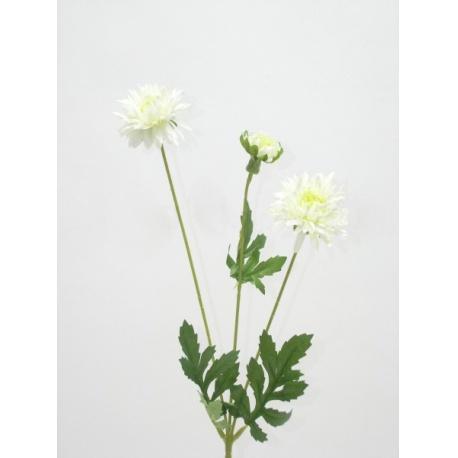 Chryzantéma trs, mix farieb, 52 cm