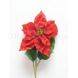 Vianočná ruža Solo, 80 cm