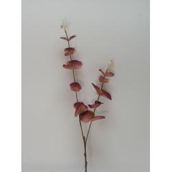 Zápich Eukaliptus, 62 cm