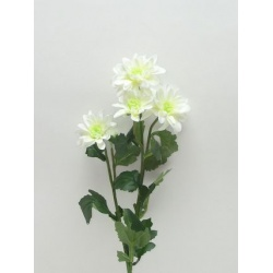 Chryzantéma, trs x5, 75 cm