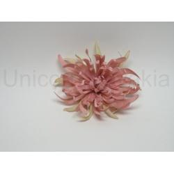 Vencovka chryzantéma, mix farieb, 12 cm