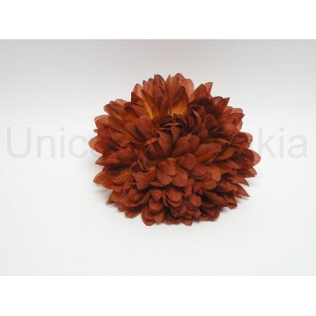 Vencovka chryzantéma, mix farieb, 14 cm