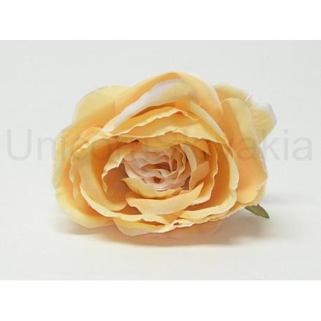 Vencovka ruža, mix farieb, 10 cm