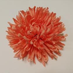 Vencovka magnolia, 18 cm