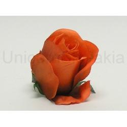 Vencovka ruža, mix farieb, 6 cm