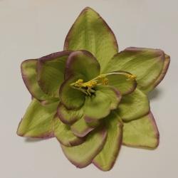 Vencovka amarylis, 19 cm