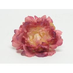 Vencovka pivonia, mix farieb, 12 cm