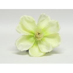 Vencovka Magnólia, mix farieb, 17 cm
