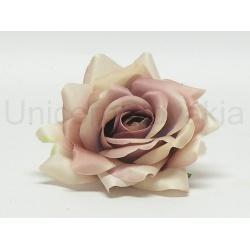 Vencovka ruža, mix farieb, 14 cm