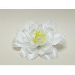 Vencovka pivonia, mix farieb, 13 cm