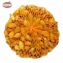 Cibuľka sadzačka, Všetana, 8-21 mm, 250 g