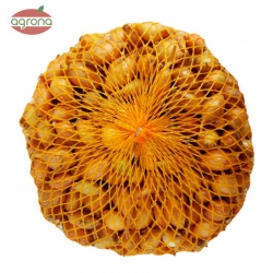 Cibuľka sadzačka, Sturon, 8-16 mm, podlhovastá, 500 g